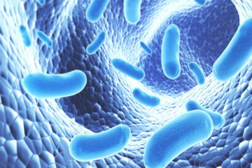 Les probiotiques et prébiotiques, les alliés des sportifs !